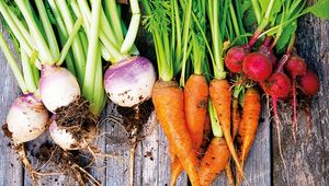 Thumb_vegetableguide