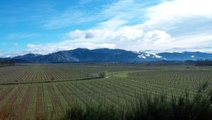 Thumb_marlborough_wine_region