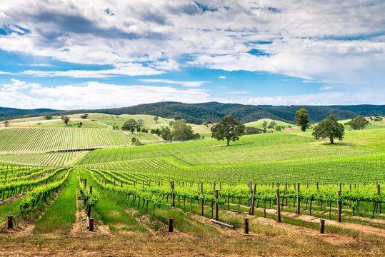 Wine valley in Barossa, South Australia