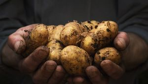 Why do the Irish eat a lot of potatoes?! Cause they\'re both super and delicious!