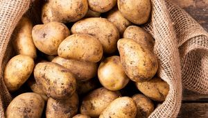 Thumb_potatoes_in_sack_gettyimages-698717842_insta