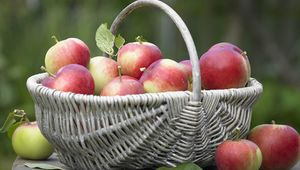 Thumb__apple_gettyimages-105683699_edit