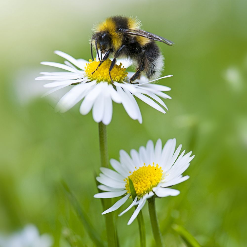 Bee_on_flower_gettyimages-926567828_insta
