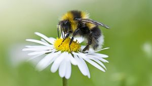 Thumb_bee_on_flower_gettyimages-926567828_insta