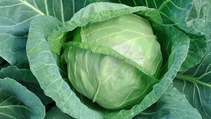 Thumb cabbage gettyimages 668396154 edit
