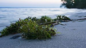 Thumb_getty_seaweed_on_shore_main