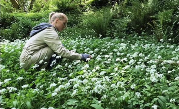 Majken Bech Christensen from Aimsir Restaurant foraging for ingredients in Ireland.