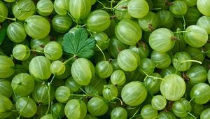 Gooseberries are in season this month.