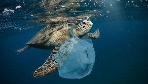Plastic pollution is a growing problem.