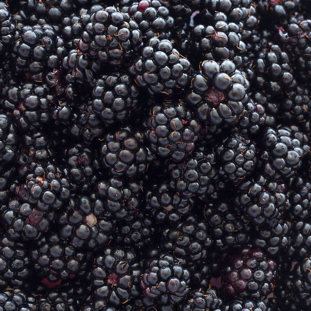 Blackberries_gettyimages-184383994_edit