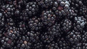 Thumb_blackberries_gettyimages-184383994_edit