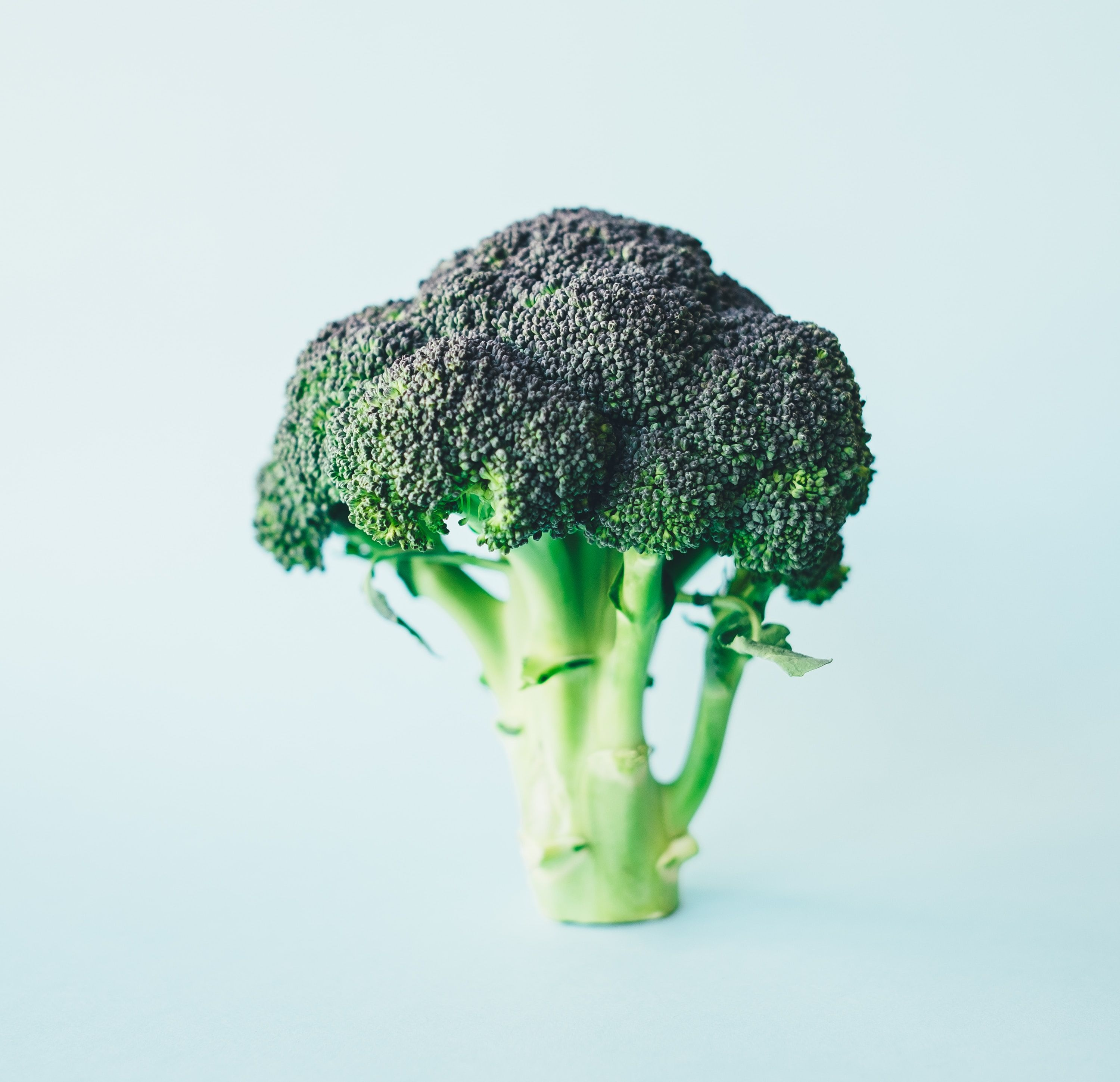 Broccoli annie spratt m1t rj1iciu unsplash