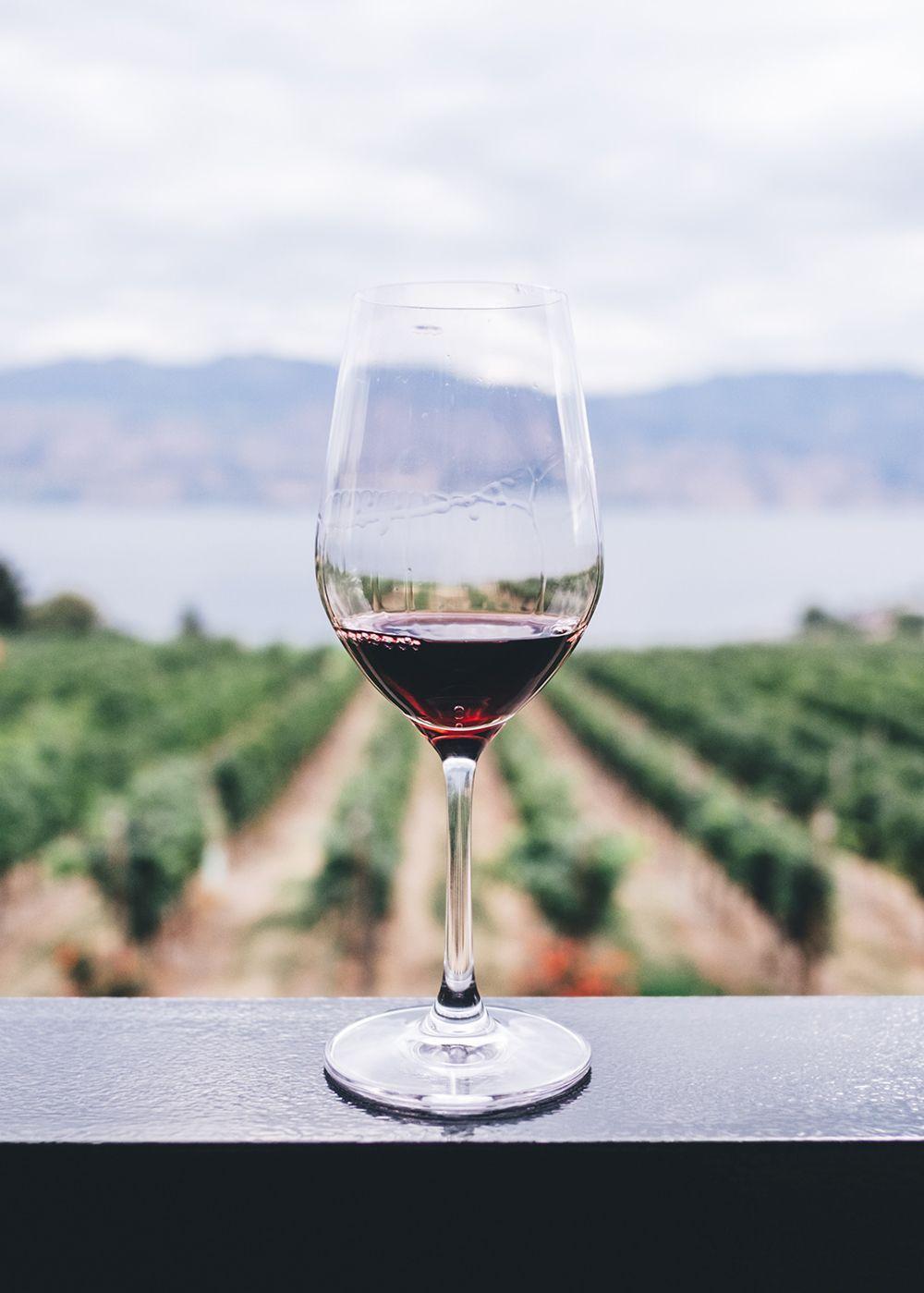 _wine_in_vineyard_kym-ellis-af1npsndqlw-unsplash_edit
