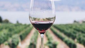 Thumb  wine in vineyard kym ellis af1npsndqlw unsplash edit