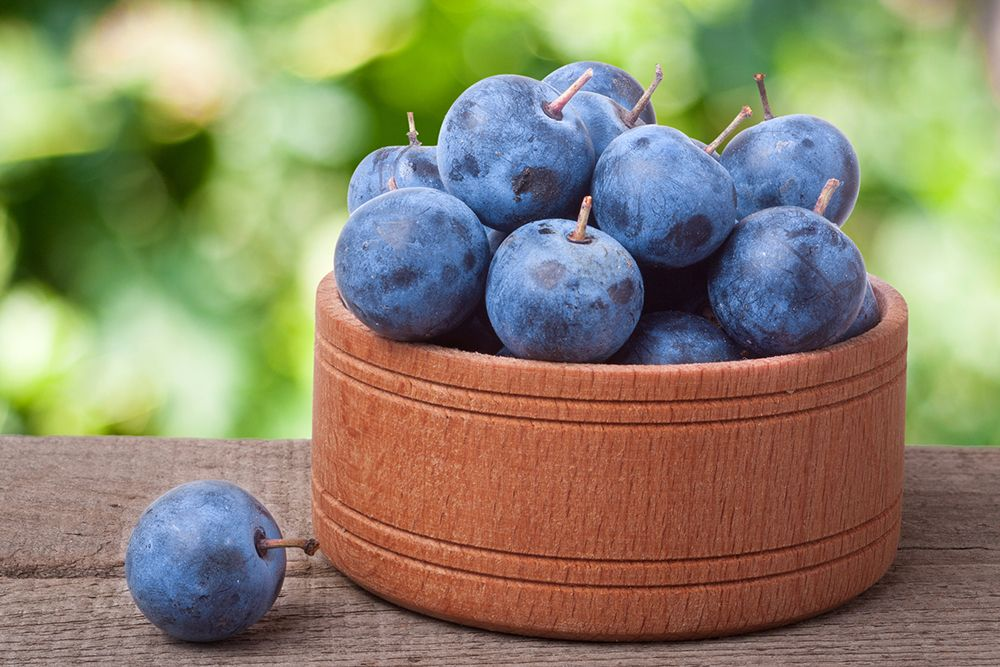 Sloe comes into season this month. Getty Images.