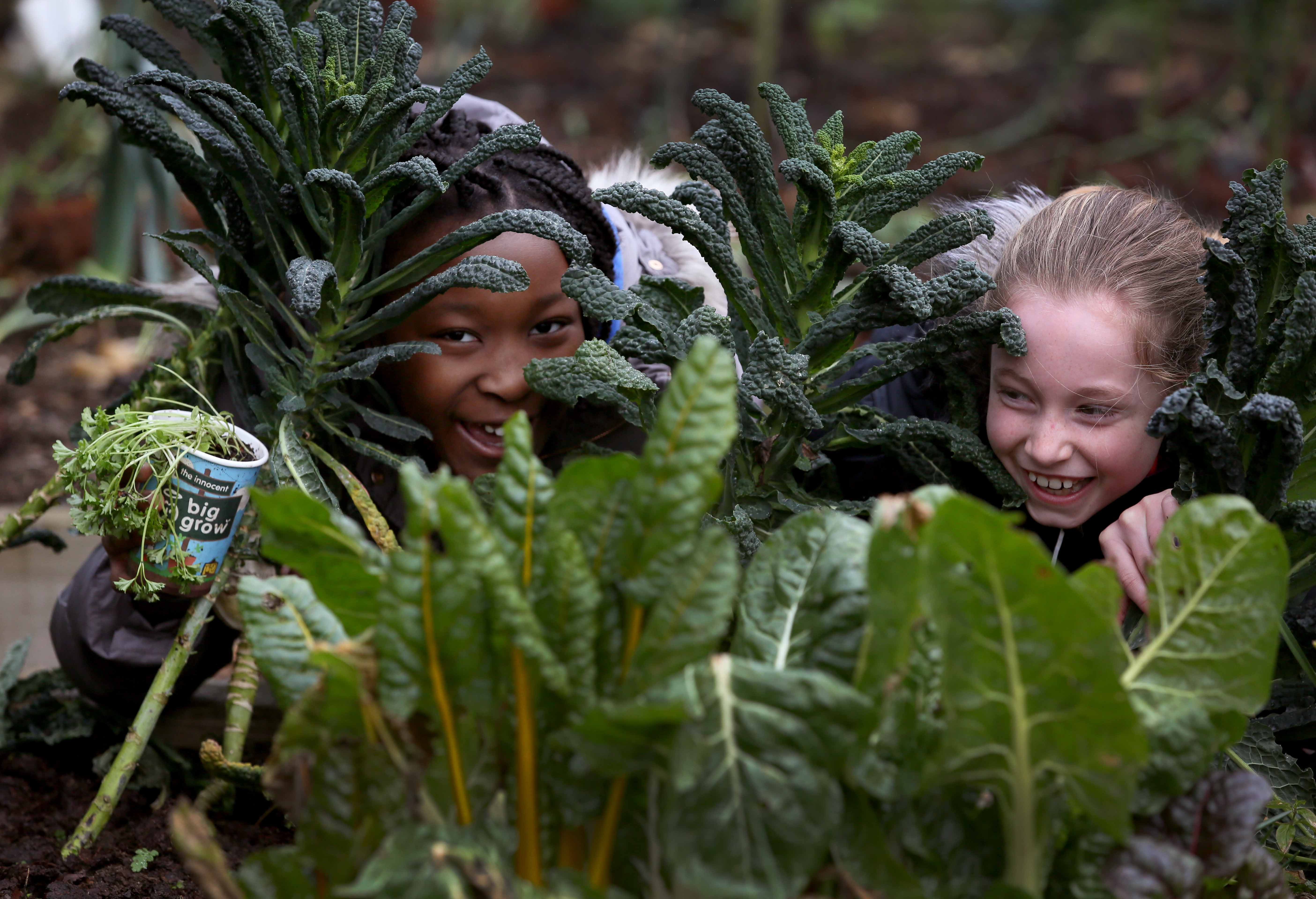 Jessica Chinamasa (9), left, and Hannah Bryce-Smith (9), little growers from St. Brigid's Garden Club in Stillorgan Co. Dublin who joined the growvolution with the innocent and GIY Big Grow earlier this year. Photo by Mark Stedman.